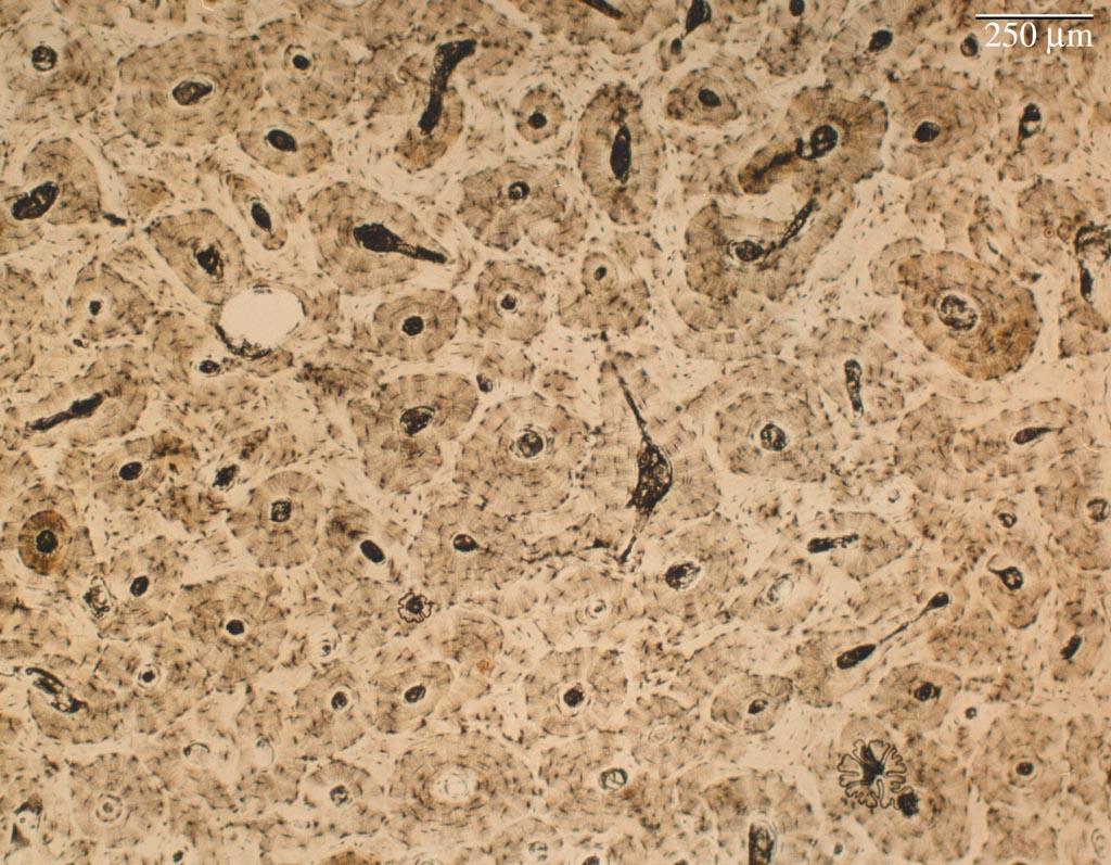 Histology bone lab dry ground slide for Soil under microscope