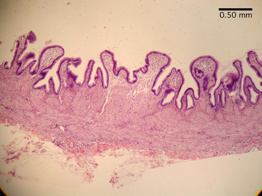 digestion lab